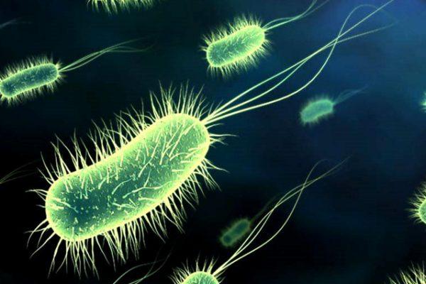 maladie-bacterienne